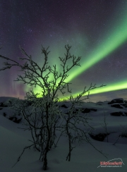 Chasing the Northern lights in Kilpisjärvi with Kilpissafarit
